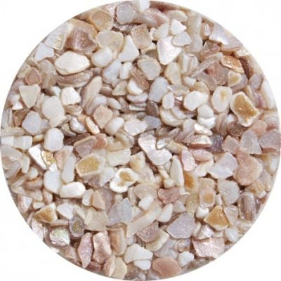 Shells (Decorative use only)
